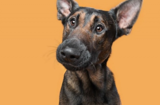 """Cười đau ruột với bộ ảnh đặc sắc về """"thần thái"""" của những chú chó"""