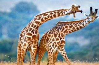 Những hình ảnh độc lạ của động vật hoang dã